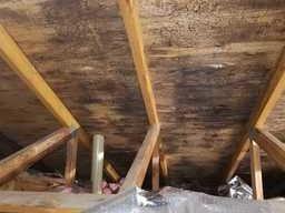 Mold in attic, Whitmore Lake