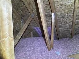 Mold in the attic, Novi
