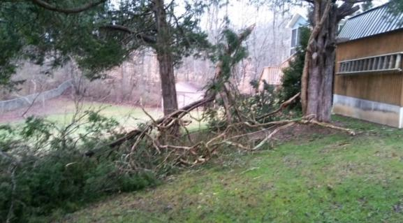 Removing a Fallen Tree Near Heiskell, TN
