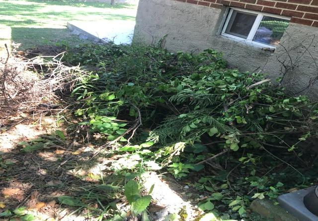 Yard Debris removal, Gwynn Oak MD.