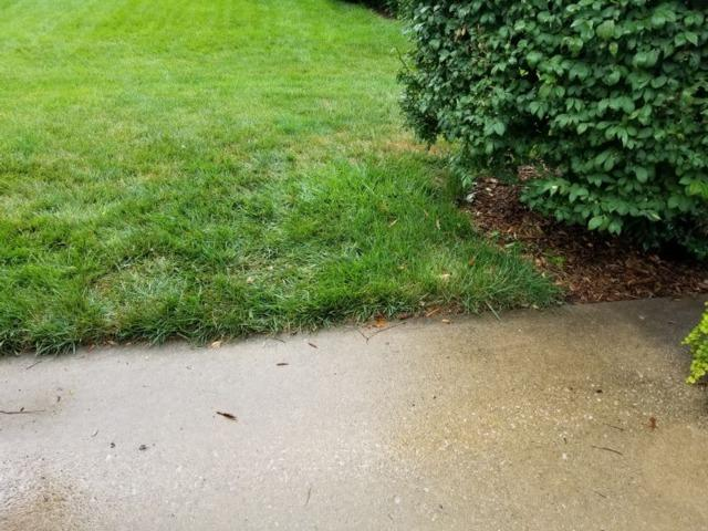 Yard Cleanup in Overland Park, KS - After Photo
