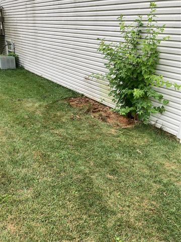 Yard Cleanup in Downingtown, PA