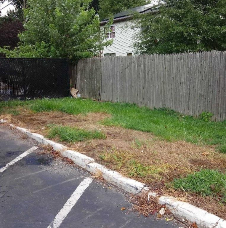 COMMERCIAL PARKING LOT CLEANOUT IN GLEN COVE, NY - After Photo