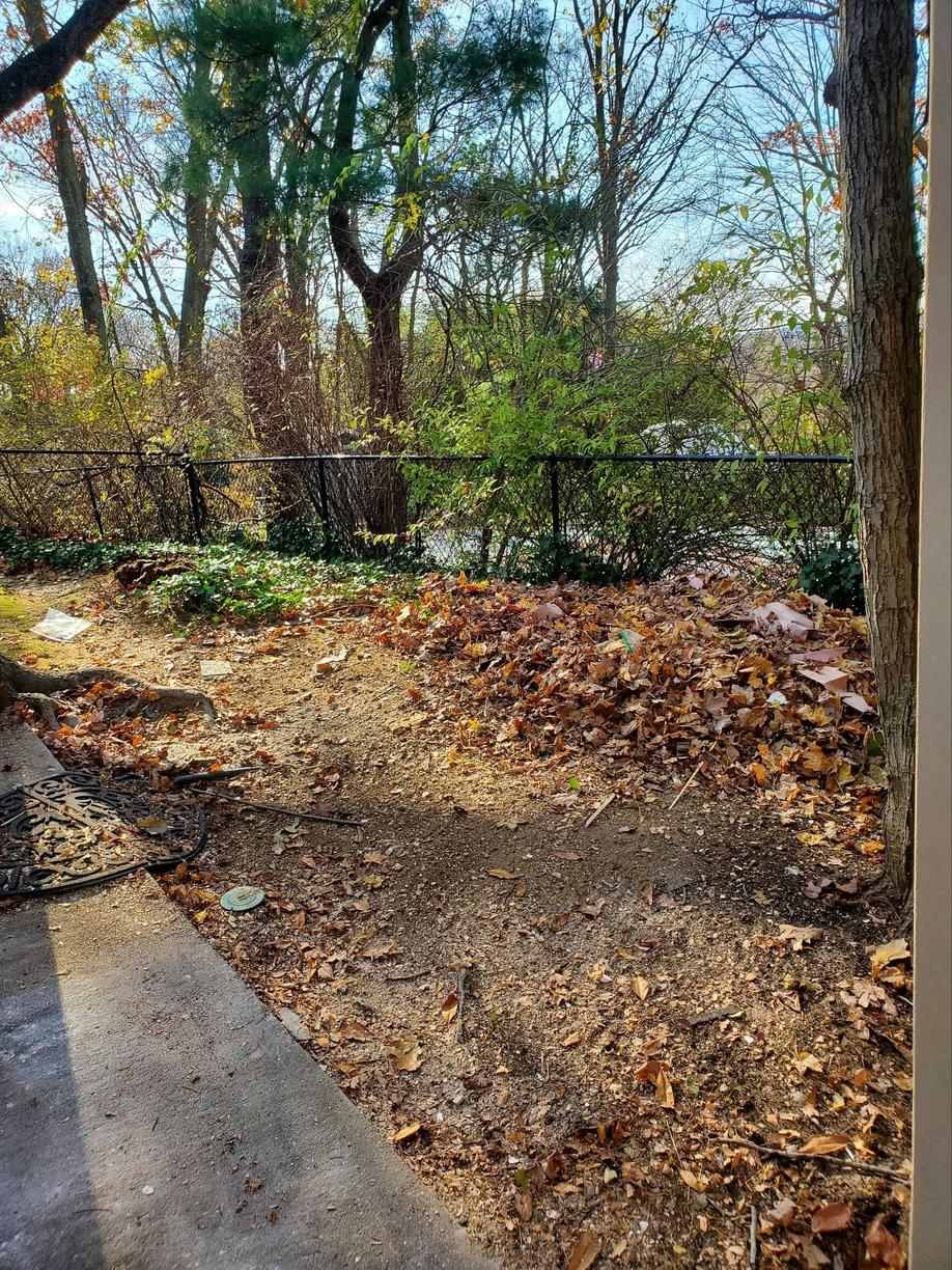 Yard Debris Removal in Bayville, NY - After Photo