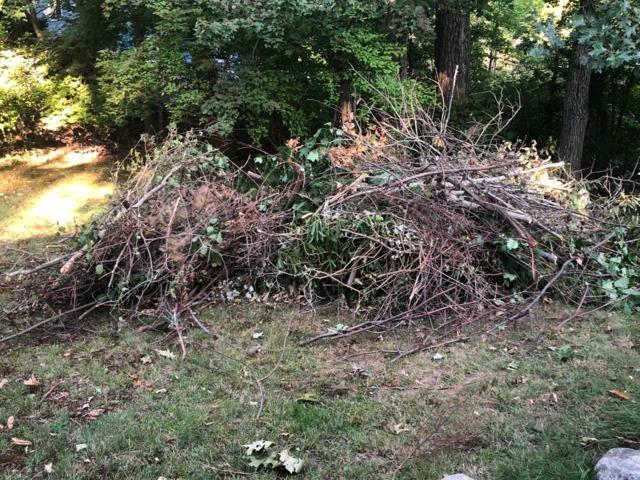 Yard debris removal in Westwood, MA - Before Photo