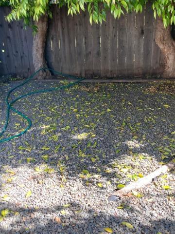 Backyard cleanout in Sunnyvale