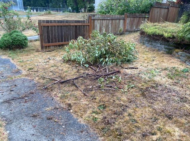 Yard Debris and Waste Removal Services in Lynnwood, WA