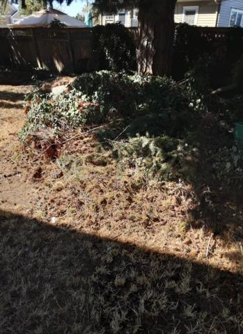 Yard Debris and Waste Removal in Everett, WA