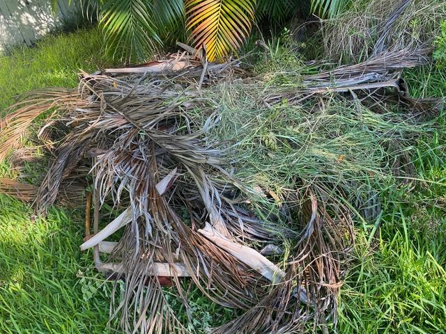 Yard Waste Removal Services in Orlando, FL