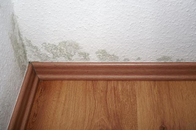 Health Effects of Mould in a Home Ontario