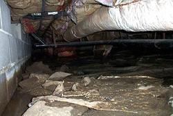 If you have a dirt crawl space, like many homes do in South Carolina, you are living on top of...