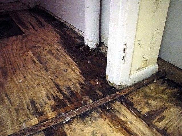 Moisture Exposed Walls and Flooring