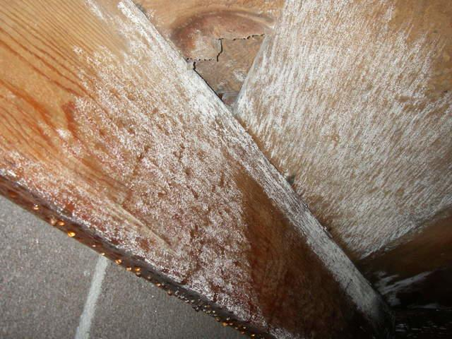 Two Big Reasons to Fix Your Crawl Space