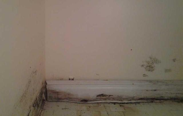 Basement Mold Growth and Prevention