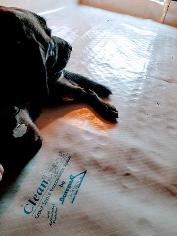 Creating a Gremlin-free, Pet-approved Crawl Space