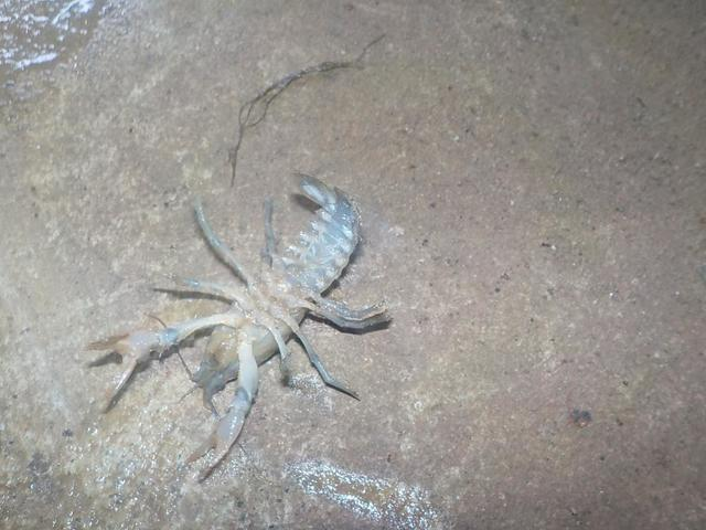 Creepy Crawly Crawl Space? We Can Help - Image 2