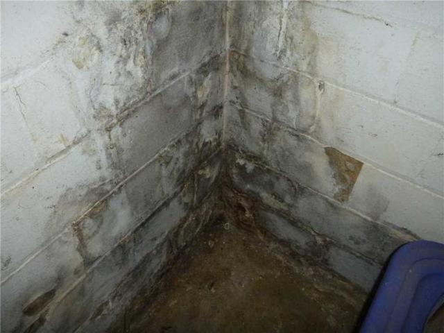 Debunking Mold Removal Myths - Image 1
