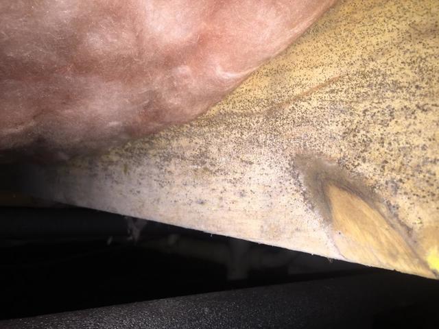 Mold on Floor Joists