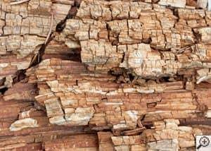 wood dry rot damage