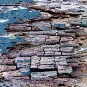 dry rot damage