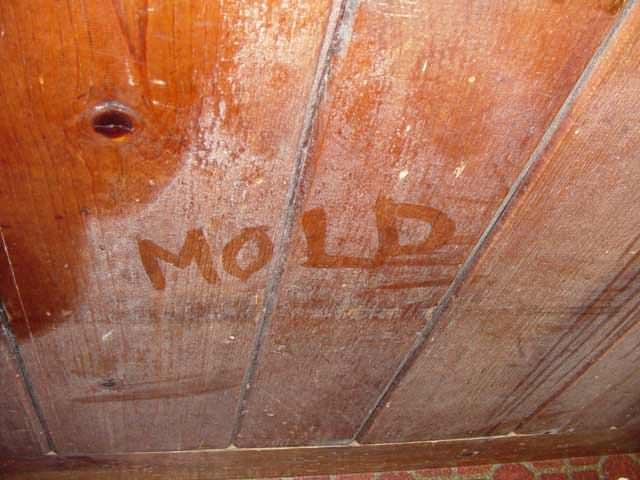 Has Mold Become More of an Issue Over Time?