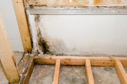Don't Let the Humidity Destroy Your Crawl Space