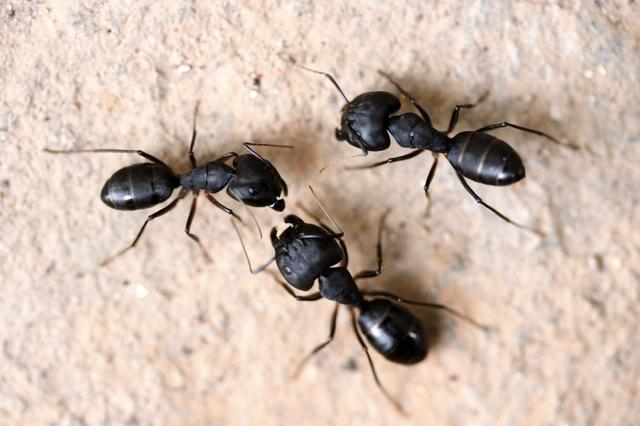 Preventing Pest Infestations In The Crawl Space Without Pest Control - Image 1