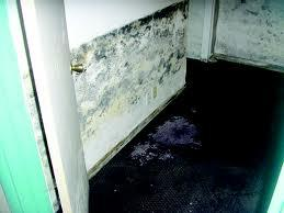 Moldy Sheetrock and Dry Wall - Image 2