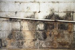 Mold Growth and Professional Mold Removal