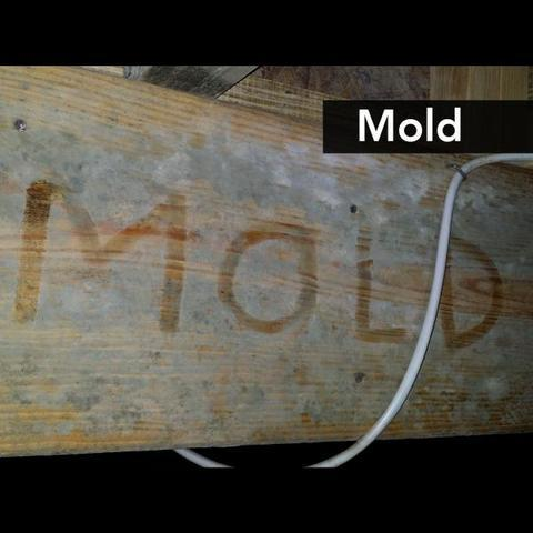 Mold in the crawl space
