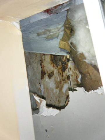 Checking for Mold in Your Owensboro, KY Home