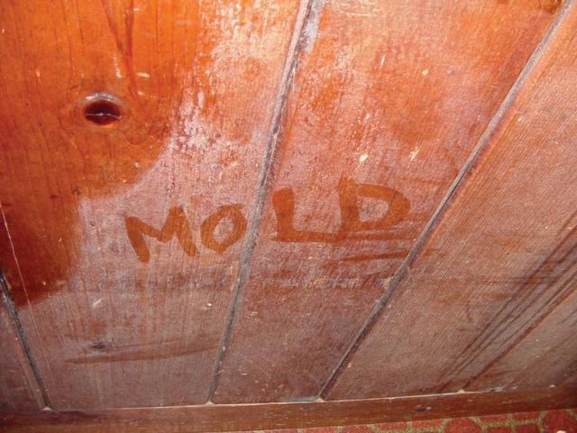 Learn about the environment mold likes to grow in and how it could be affecting your family's health....