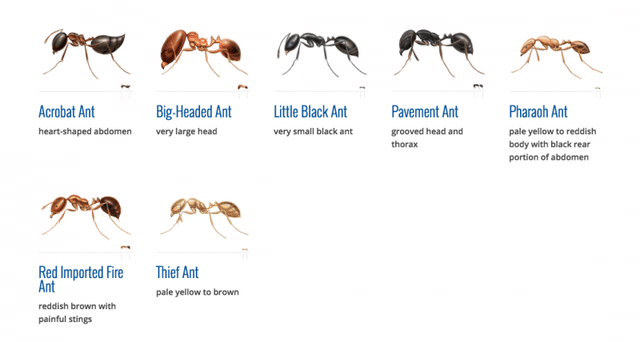 ant guide