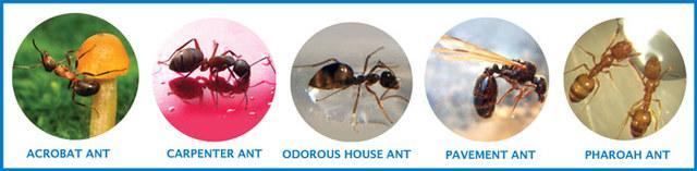 Ants Header