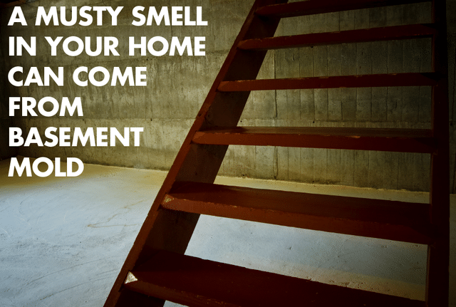 Musty air in your house may come from the basement....