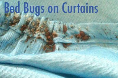 bed bugs on curtains