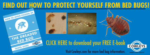 Tips for New Jersey Commuters to Avoid Bed Bugs on Public Transportation