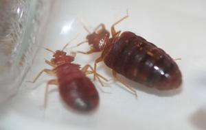 Different pests cause different problems in the home. Learn how bed bugs, termites and other pests cause significant damage and...