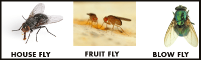 Homeowners Guide to Flies  - Image 1