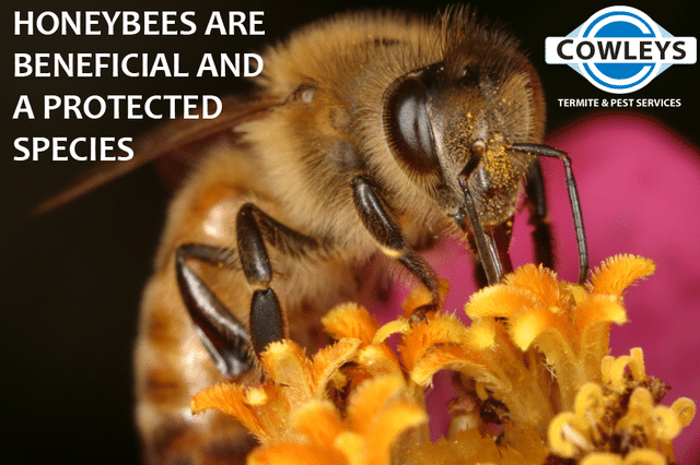 6 Ways to Protect Bees and Other Pollinators in Your New Jersey Backyard