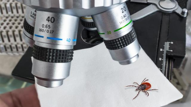 Tick Microscope