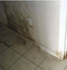 Learn the truth about mold testing in New Jersey....