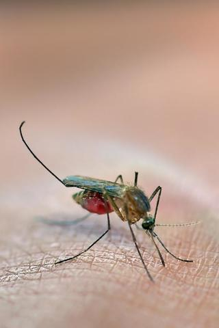 What Attracts Mosquitoes to Your Yard