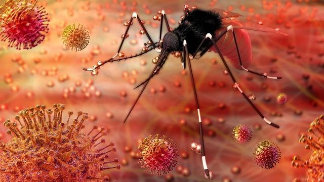 Mosquito & Zika