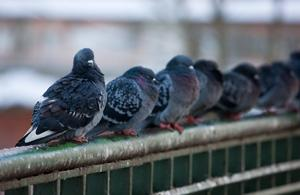 Nuisance birds might seem like just an annoyance, but they can also cause damage, pose serious health hazards and destroy...