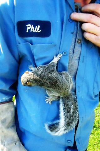 NJ Homeowners Guide to Squirrels - Image 2