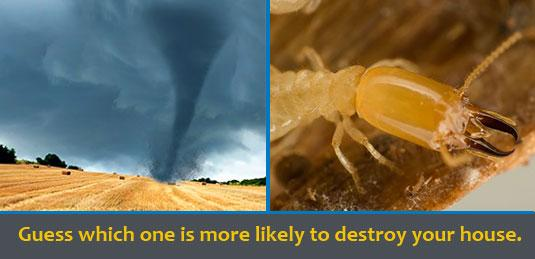 The Tried and Tested Way to Protect Your Home from Termites