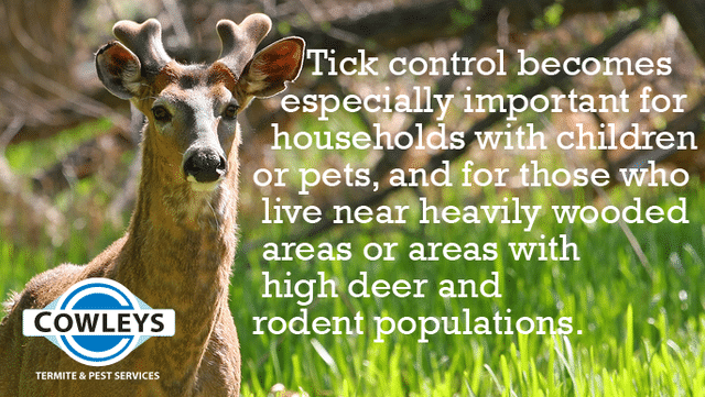 Spring Is the Best Time to Start Treatment for Ticks