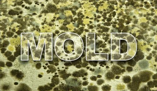 Don't let mold cause you or your family members to experience health issues. Call a professional to rid of the...