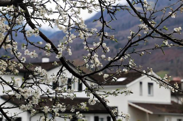 5 Ways to Prepare Your Home for Spring